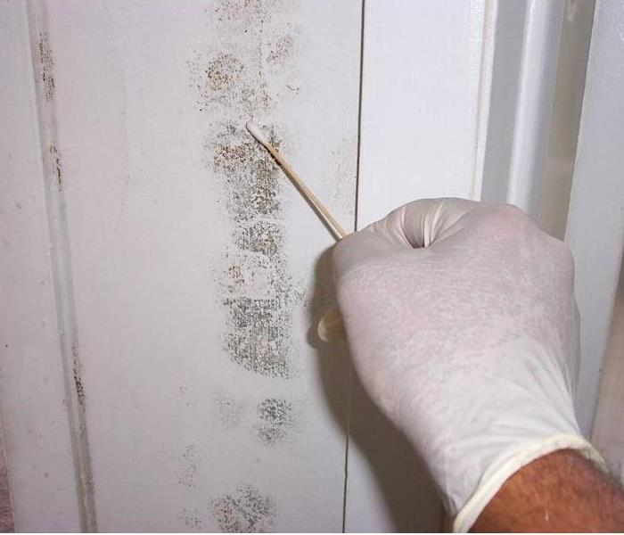 Mold Remediation Signs of Mold